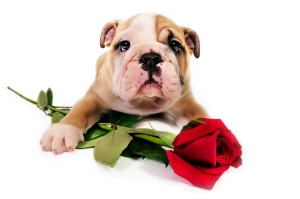- found on http://critterconsulting.com/info/?tag=valentine-2